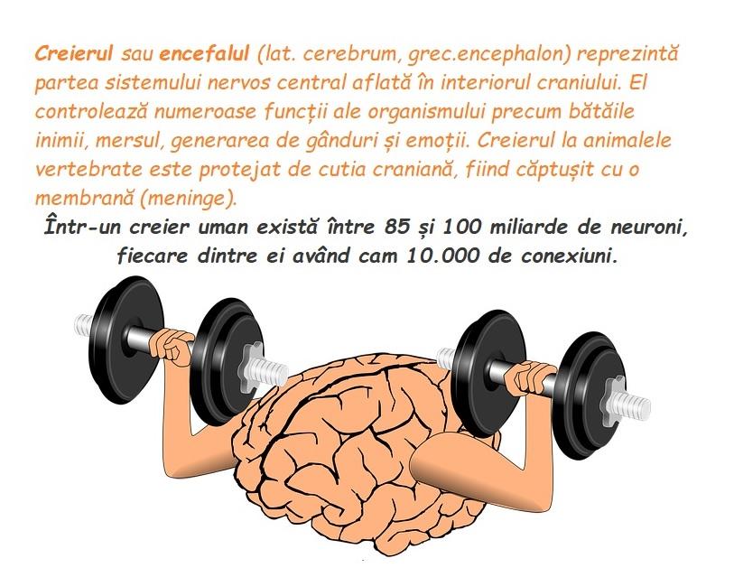 Creierul, unul dintre marile mistere