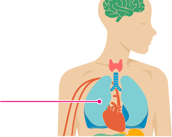 Simptomele problemelor de respirație în Scleroza Multiplă